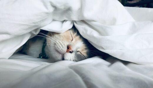 【9時就寝】子供を早く寝かせたい!今日から実践できる方法。【睡眠時間を確保】