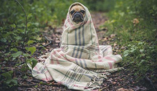 【罪悪感】風邪をひいた! でも休めない! そんなあなたへ。【休むときは休みましょう】